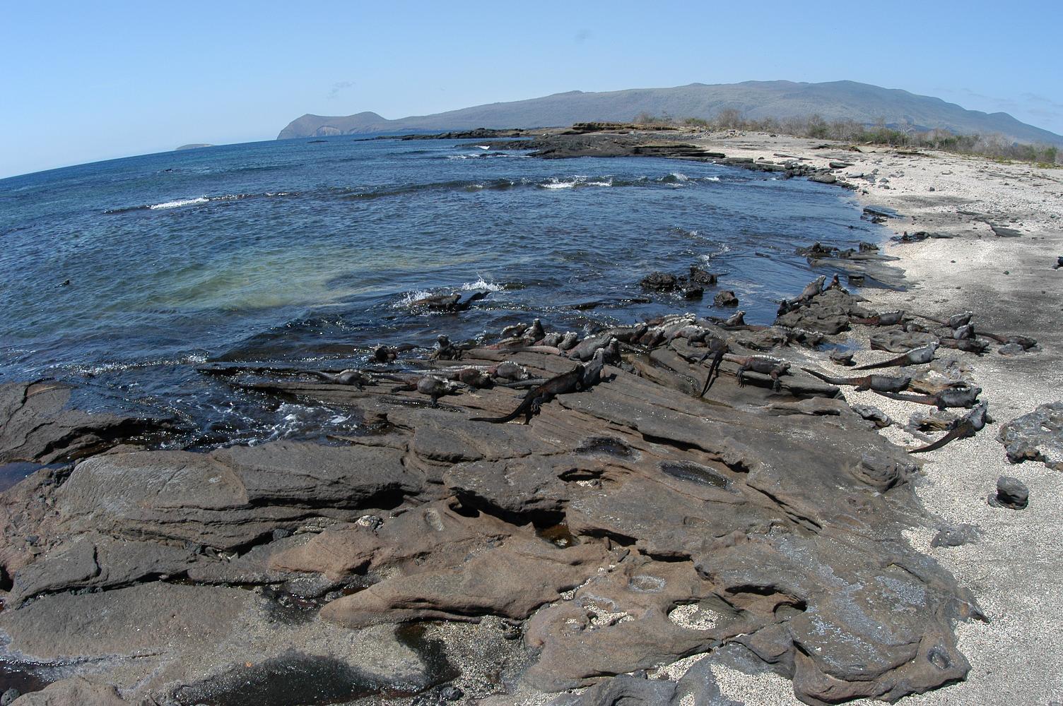ガラパゴス諸島の画像 p1_25