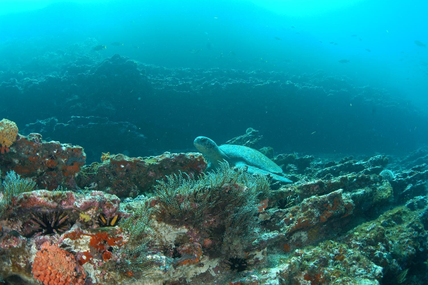 ガラパゴス諸島の画像 p1_14